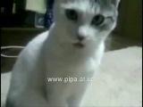 отчего кот мог так удивиться?